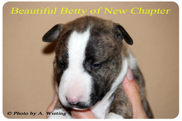 Beautiful-Betty-front-Tag28