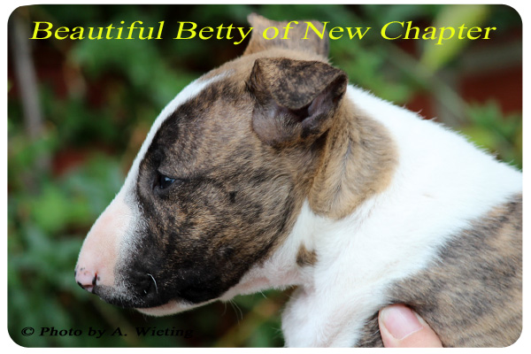 Beautiful-Betty-seite-49Tag